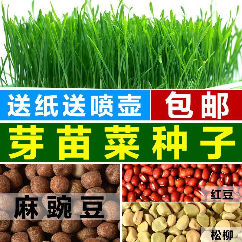 芽苗菜种子包邮芽菜种子纸上种菜芽苗菜豌豆空心菜秋葵紫苏萝卜
