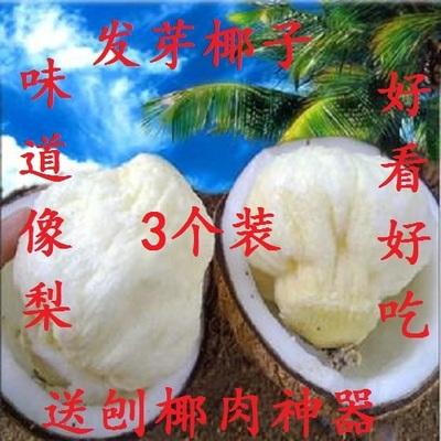 发芽椰子海南特产椰皇椰王去皮老椰子汁水肉椰青新鲜水果3个包邮