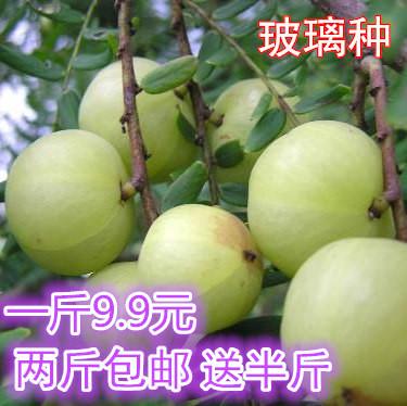 现货潮汕现摘油甘子 玻璃种余甘果 药食两用新鲜油柑子果 2份包邮