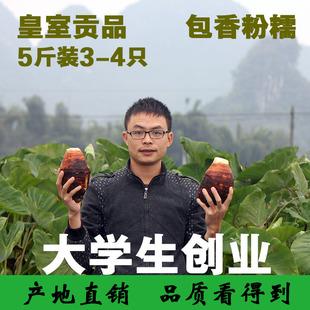 正宗广西荔浦芋头毛芋香芋艿新鲜槟榔蔬菜 5斤装包邮