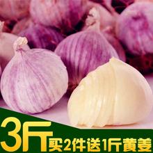 包邮 3斤新货云南特产大理紫皮独头大蒜新鲜蒜头蔬菜农家自种1500g