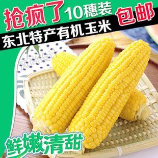 东北特产粘玉米甜糯玉米棒粘苞米新鲜白糯玉米冷冻粘糯玉米棒包邮