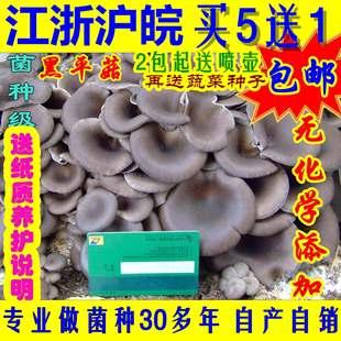特价平菇袖秀珍榆黄菇灵芝蘑菇菌种食用菌棒菌包种植种子直销包邮