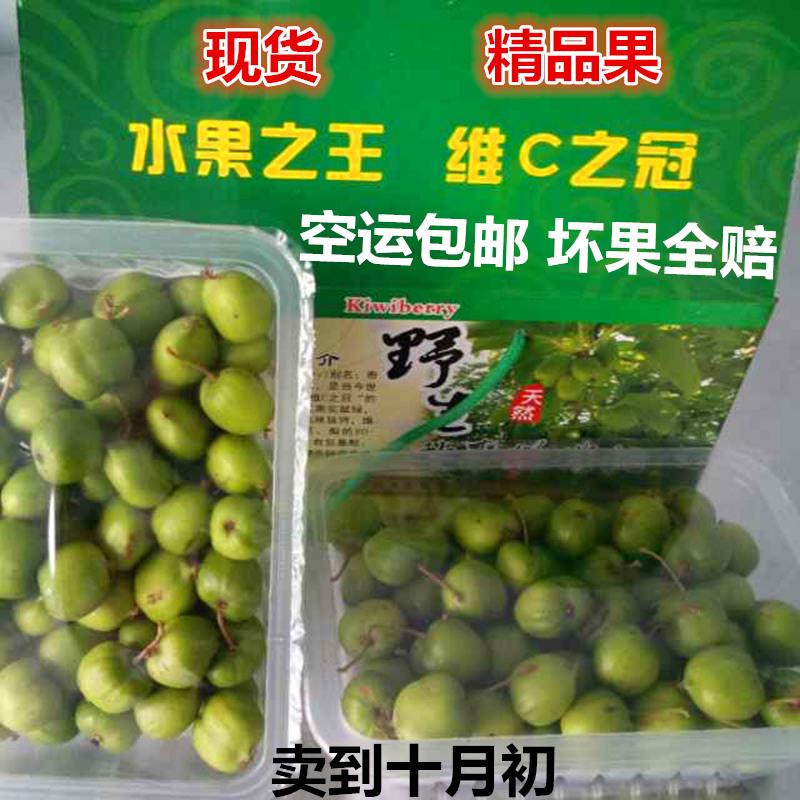野生软枣子猕猴桃 新鲜圆枣子 软枣猕猴桃 奇异莓元枣子狗枣子