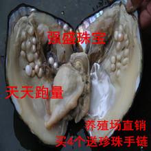 鲜活淡水珍珠大河蚌活珍珠蚌活体珍珠蚌珍珠贝养殖娱乐教育都不误