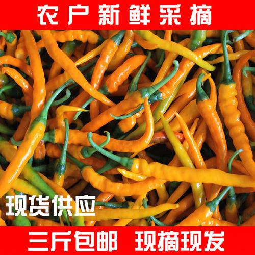 湖南衡东三樟黄贡椒 原产地自种新鲜黄贡椒直供土菜馆御用辣椒