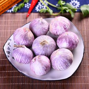 云南特产独有紫皮大蒜独头蒜4斤2015大蒜头新鲜蔬菜上好食材包邮