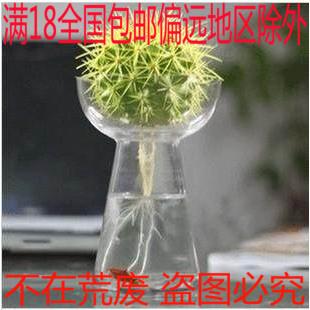 水培金琥仙人球盆栽 阳台办公室水生土养两用植物防辐射 套餐包邮