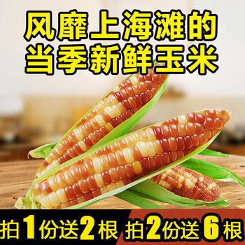 10根新鲜甜糯玉米棒即食甜玉米面粉渣水果爆米花黑黏小玉米粒速冻