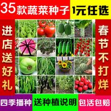 蔬菜种子四季播种子蔬菜芽苗 阳台盆栽水果草莓香菜籽葱种子包邮