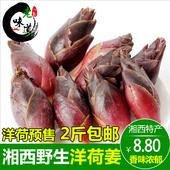包邮 2017洋荷姜新鲜阳荷茗荷野生湖南湘西沅陵特产农家蔬菜野菜