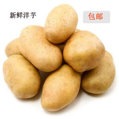 云南曲靖农家自种新鲜黄心大土豆洋芋现货马铃薯批发15斤新货包邮