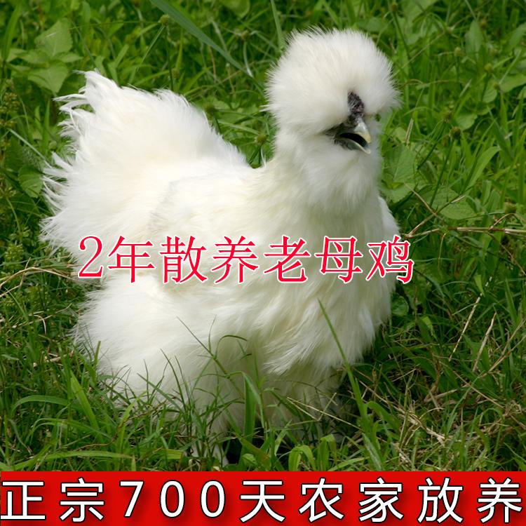 泰和乌鸡乌骨鸡农家老母鸡散养农村土鸡苏北草鸡五黑鸡生鸡肉包邮