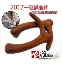 鹿茸片 新鲜鹿茸2017刚割梅花鹿茸头茬二杠2.4元 整枝 鲜鹿茸