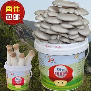 蘑菇菌种茶树菇种植桶植物双孢菇蔬菜秀珍菇白玉菇猴头菇平菇农产