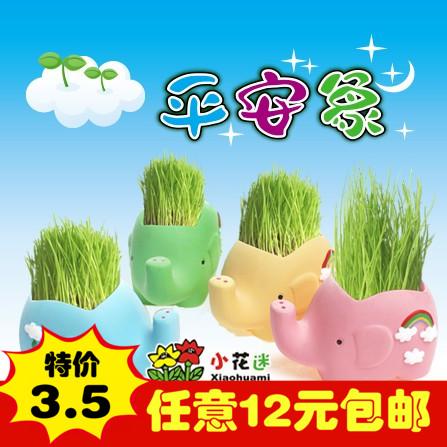 草娃娃创意迷你小盆栽景青草头娃娃DIY办公室内桌面平安象绿植物