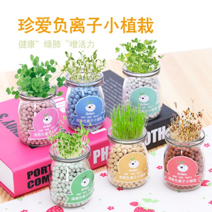 创意室内负离子水培盆栽办公桌面水培陶碳球防辐射迷你小盆栽种子