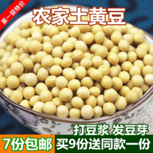 东北特产大豆250g发豆芽打豆浆豆类杂粮 包邮 农家黄豆 土黄豆