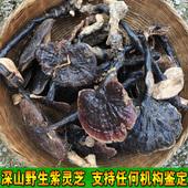 深山采摘纯野生灵芝正宗紫灵芝林芝整枝紫芝黑芝可切片250g 半斤