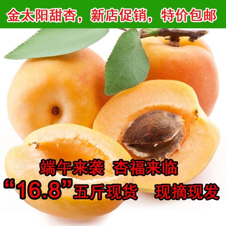 产地直发酸甜孕妇可口 时令金太阳新鲜水果大黄