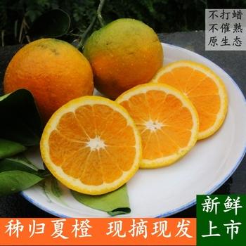 现摘榨汁夏橙10斤毛重湖北秭归脐