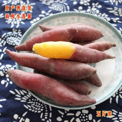 新货临安特产天目山迷你小香薯番薯黄心红薯山芋5斤装新鲜地瓜