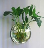 墙饰挂饰壁饰壁挂鱼缸花瓶创意家居饰品客厅墙上花盆墙壁墙面装饰